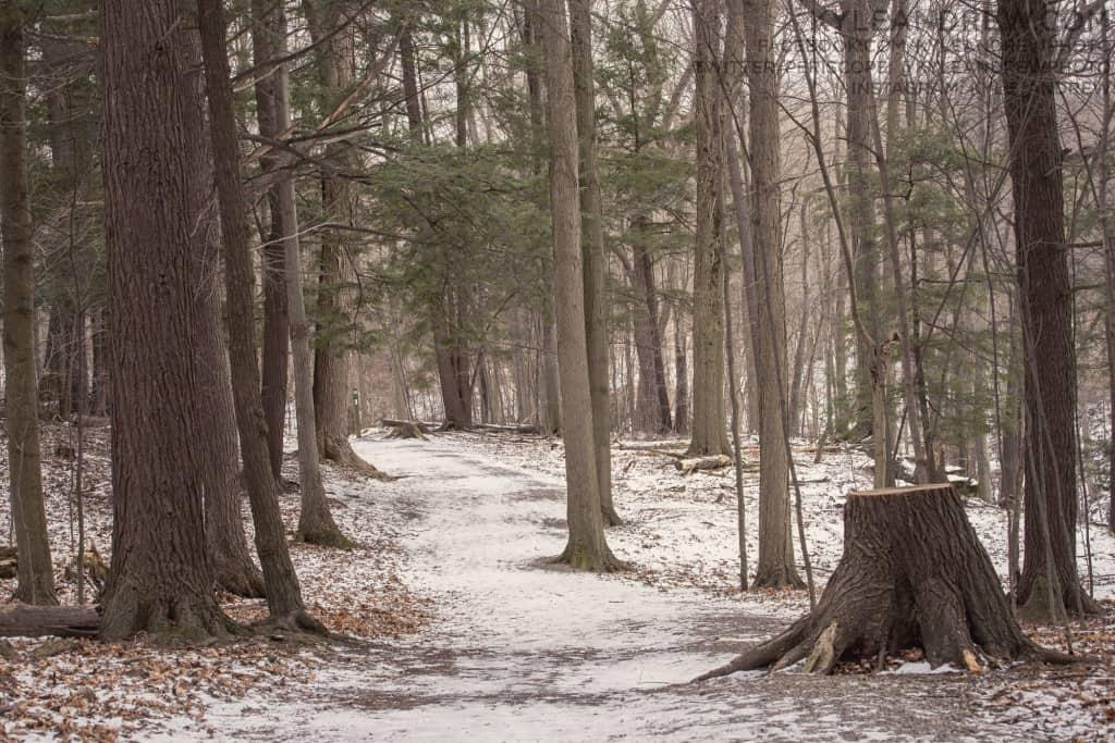 kyleandrew_dotcom_winterwalk_001